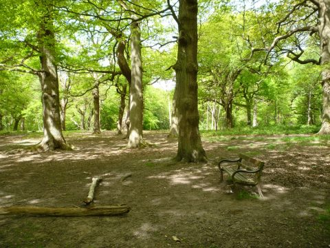 Image of Southborough Common, trees and bench