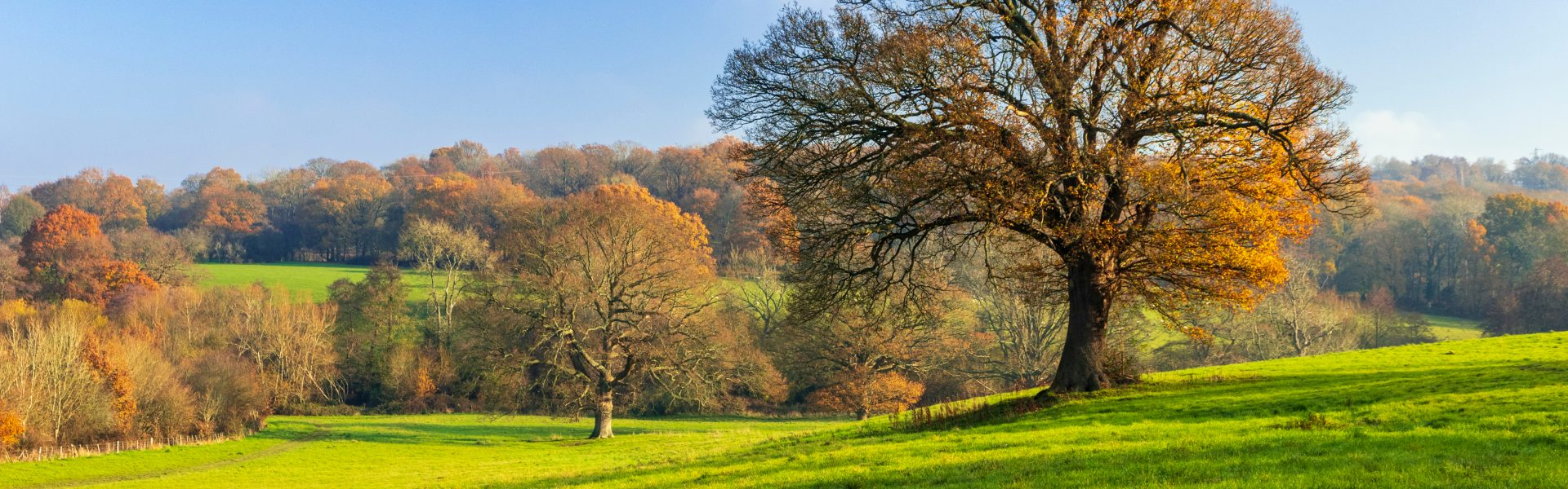 Last Days of Autumn on Southborough Common